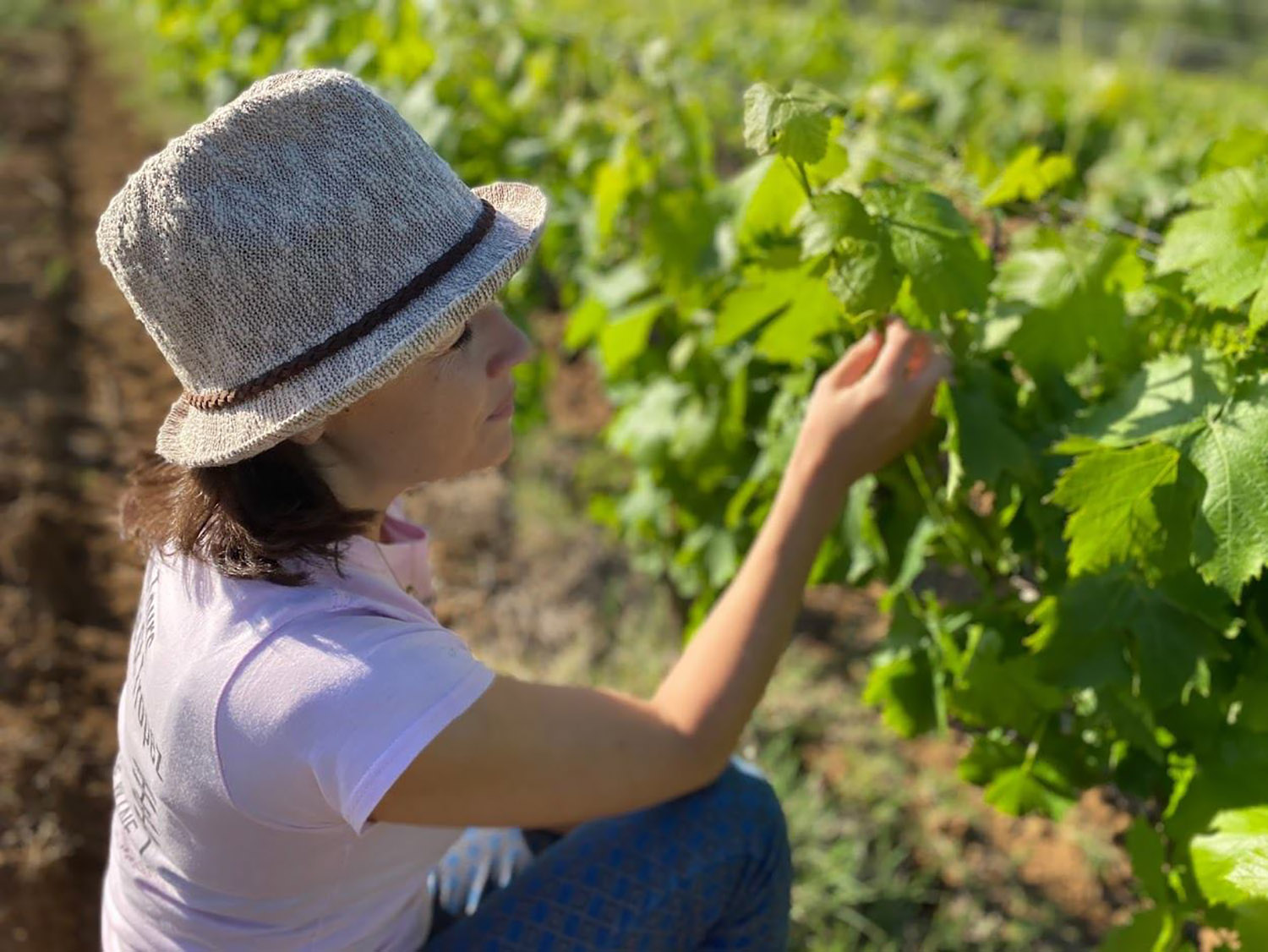 Visit to the vineyards of the Gulf of Saint-Tropez